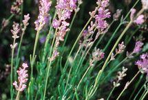 Gardening tips / Wonderful tips for gardening, from planting to pruning.