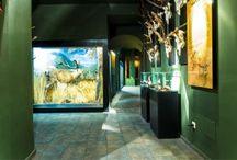 Caza, Hotel Orgaz, Restaurante - Asador, caza toledo, hotel Orgaz, montes de toledo, museo de la caza y la naturaleza, Posada de la Cal