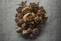 DryLove / The Beauty of Dried Flowers Baskets and Settings Of Life in a Dried Form..... / by Jewel Catherine