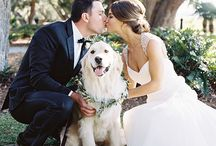 Wedding with dogs