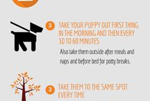 How To Train Puppy