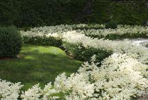 white  - green flowers