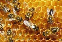 Bees / by Kristine Halsey