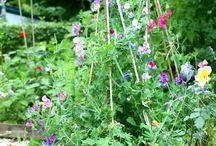 Garden- insirations