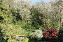 Spring into Summer 2015 / Ashridge Nurseries' Summer photo competition (entries to competitions@ashridgetrees.co.uk)