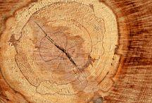 Baumkunde / Parkett besteht aus nachwachsenden Rohstoffen. Wie sieht das Holz aus, bevor es verarbeitet wird? Welche Eigenschaften hat das Holz?