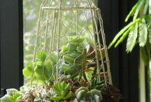 Jaulas con plantas