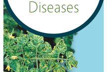 Diseases in tomato plants