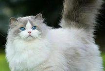 gatinhos originais e lindos!