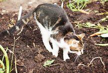Astuces REPULSIF ANIMAUX  : CONTRE LES  CHATS, sans danger pour les chats; CONTRE LES FOURMIS