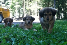Rescued Friends!!! / by Suzanne S