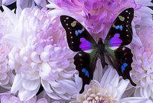 Farfalline / Farfalle colorate