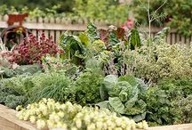 Gardening / Tips and tricks for a beautiful home garden - vegetable gardens and flower gardens