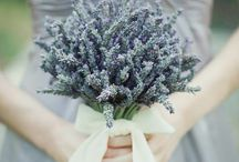 Gallio's wed fest