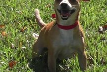 Dogs for Adoption / PuppyFinder.com is proud to be a part of the online adoption community. Browse thru thousands of Dogs for Adoption, listed by Dog Rescue Organizations and individuals, to find your match.