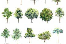 Vector Vegetation