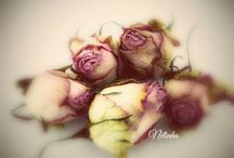 """Passion """"LA ROSE"""" PHOTOS HOME MADE"""