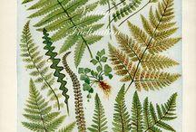 STUFF | Plants
