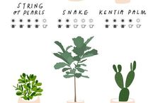 Growing your own / Garden, balcony, organic gardening, amazing food, indoor plants, plants, green,