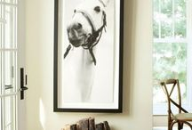 Horse in the Home