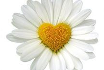 daisy..