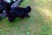 Wilmu The Cat