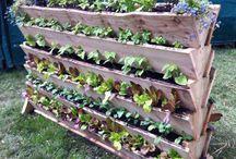 Potager / Culture et astuces pour un jardin potager.