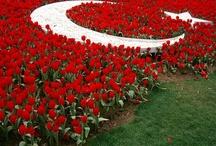 Turkiye / turkish,turkiye,turkey