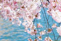 foto wiosna