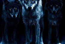 lobo en manada