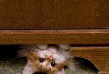 peek-a-boo!!!