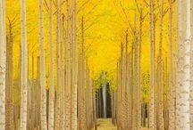 Yellow / by Johannah Risk