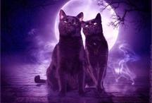Wicca/Paganism / by Hollie Sawyer