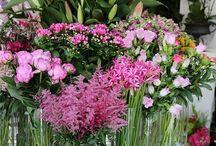 Phillo Flowers Shop