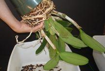 Como cuidar/plantas.