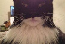 Batman Cats