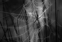 Fotografia in bianco e nero / by Patmoon
