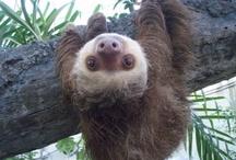 Sloth You!!! / by Jill Stephens