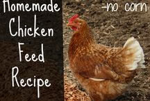 Farm Poultry (Chickens, Ducks, Guineas, Etc) / Pins relating to all types of farm poultry/fowl.