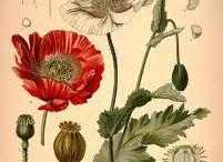 #ilustra #botanical
