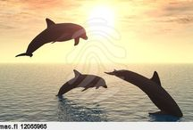 Dolphins / If I were an animal, I'd love to be a dolphin.