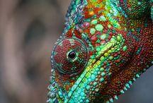 REF: Lizards