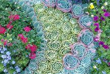 Etli Yapraklı Bitkiler / Ev bitkileri