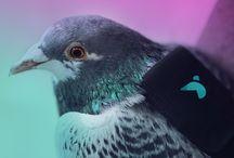 Urban Bird Control