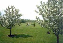 Michigan Par 3 and Executive Golf Courses / Michigan Par 3 and Executive Golf Courses