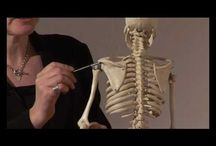 Anatomi ve kinesioloji