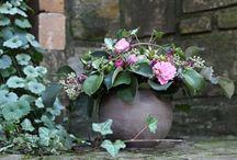 Hana N. - garden, flowers / garden