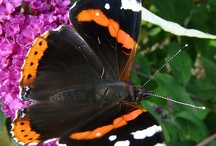 Gorgeous Butterflies