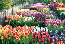 *** Gardening Group Board *** / Share your gardening inspiration here! Send an email to floriferousgifts@gmail.com & follow me and I will add you to the group. No advertisement please!