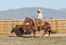 reining cow horse / by Lisa Sykes